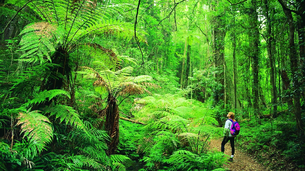 Bushwalking in tropical forest